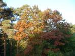 Le Chêne Rouge au début l'automne