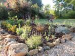 Poolside planting