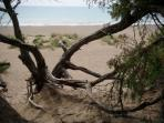 private 10.000 sq.m private  sand dunes and fenced botanic garden and beach area, 10 km away