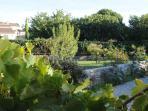 Le jardin riche en plantes: lauriers roses,oliviers,grenadiers..............