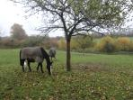 Our two horses that live on the property