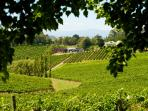 .Local winery in the Yarra Valley. All wineries within 5 to 10 minutes drive from the house.