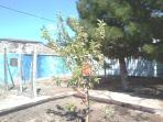 GRANNY SMITH FIRST HARVEST (9) 2014