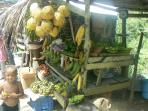 You can buy fresh produce from villagers' stalls.