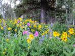 July wildflowers in the neighborhood!