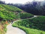 Feel free to have your evening jog along the tea plantation (300M away from our house)