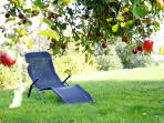 Under the apple tree in the orchard