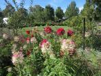 Amazing exhibition garden