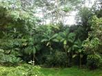 View of beautiful jungle from Lanai