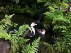 Ducks enjoying the pond.