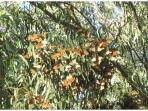 Be sure to visit the Monarch Butterfly Sanctuary in Pacific Grove.
