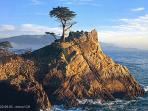 Take a drive on the famous 17 Mile Drive in Pebble Beach and see the Lone Cypress.