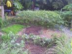 Garden with organic veggies and chickens
