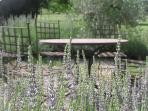 Dining area surrounded by olives and lavender
