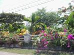 Runaway Garden