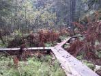 Boardwalks in the nearby forest