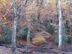 November is a great time to see the autumn colours: here St Anthony's well down in the valley