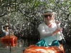Mangrove Canopy Kayaking