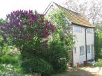 Shillings Cottage with the lilac in bloom.