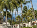 Palms at Wailea #702