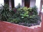 Plants at room front door