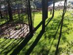 Parklike front yard