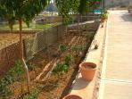 Part of the vegetable garden which you can use for your meals!