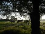 prairie de la ferme et 3 des cinq chevaux