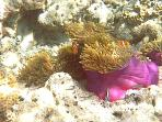 Visit to pristine reef for snorkeling with personalized service
