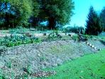 The Potager - organic seasonal vegetables available all year round