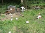 We have a smallholding with chickens . . . an orchard . . .