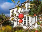 Springvale's fruit garden
