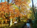 Autumn sunshine on the beck running through Orton's grounds