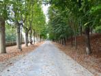 Il viale del parco reale, direttamente accessibile dalla Dimora.
