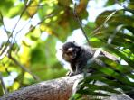 Sítio Folha d´Água: little monkeys