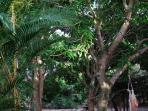 Sítio Folha d´Água: in the garden