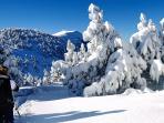 L'hiver dans le Ventoux