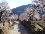 The road down from Chité to Cassa Moginar, almond blossom in Februry