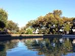 Les Terrasses - Gordes : Heated pool and garden