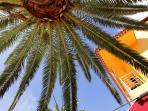 La palmera al lado de la casa ** The palm tree by the house