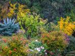 Bonafide garden