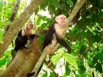 monkeys in Casa Bella's yard