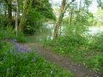 Coarse fishing lake in the spring