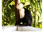 Monkeys are frequent visitors to the the villa