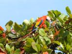 Beautiful scarlet macaws can be spotted in the area