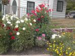 Summer garden full of colour!