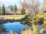 Front pond with goldfish and Black Butte view