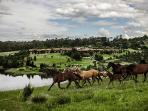 Horse riding 50m