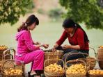 Fruity season May - September