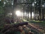 Nearby Thetford Forest offers great walks all year round